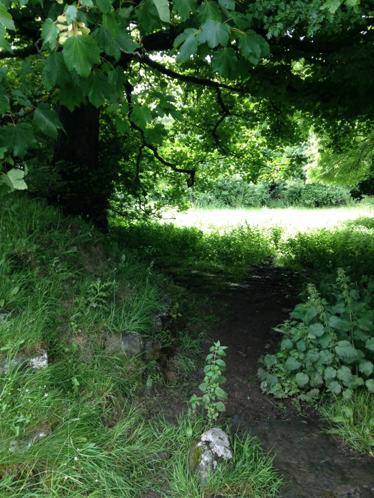 6 2016-06-29 10.10.17 path and creek