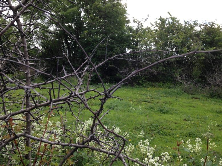 8 2016-06-29 10.44.20 loughneera branches